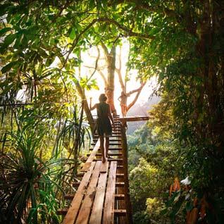 Guadeloupe - Pont suspendu du jardin de Balata